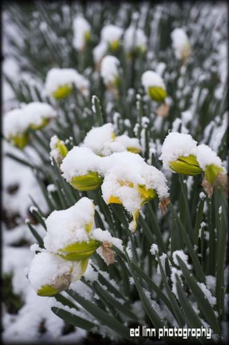 snowonflowers